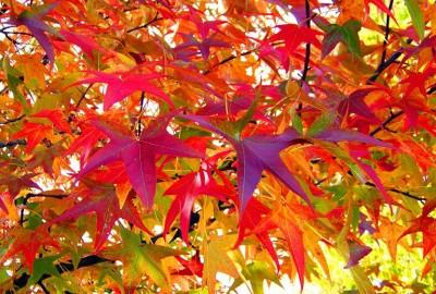leaves-18051_1280もみじ