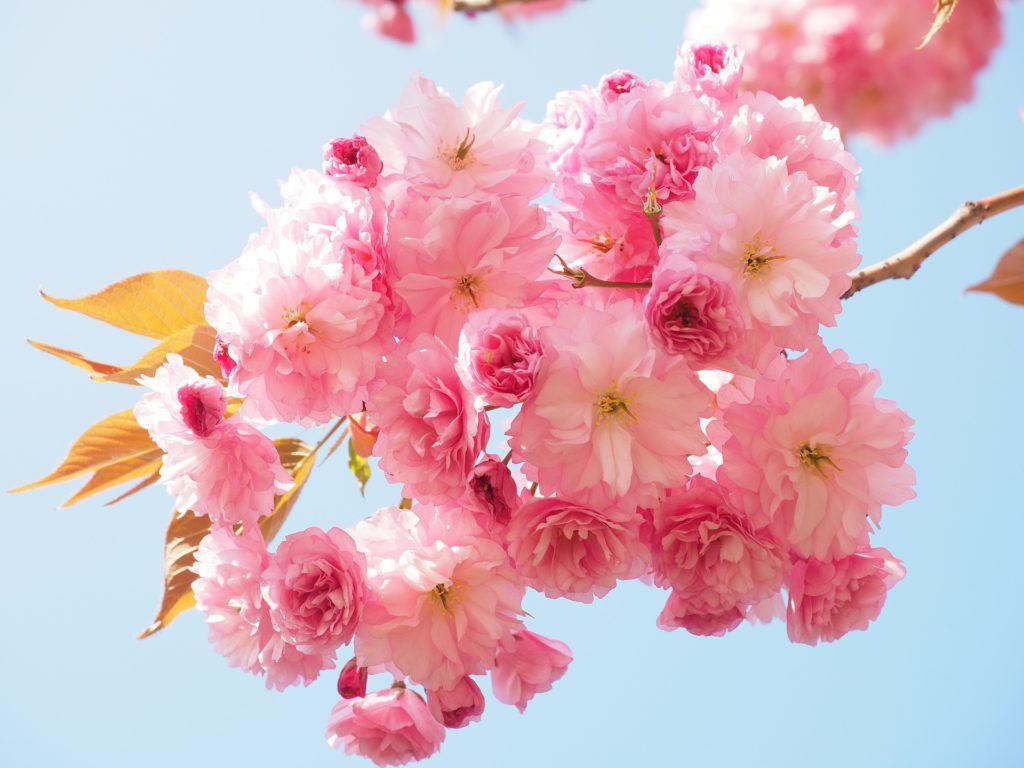 中高年パーティー 3/28  ホテルニューオータニ